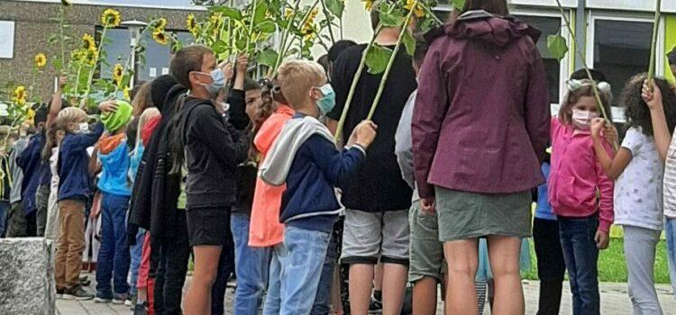 Am Mittwoch wurden die vierten Klassen von unseren Erstklässlern mit einem Blumengruß verabschiedet.